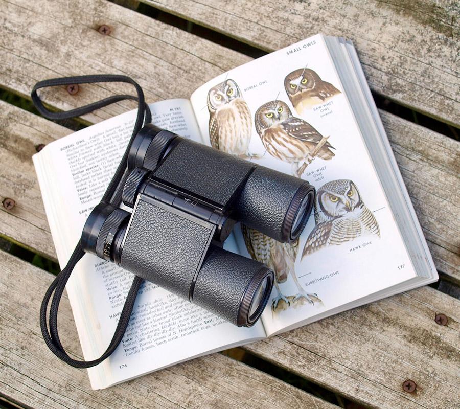 Jumelle oiseau sur livre