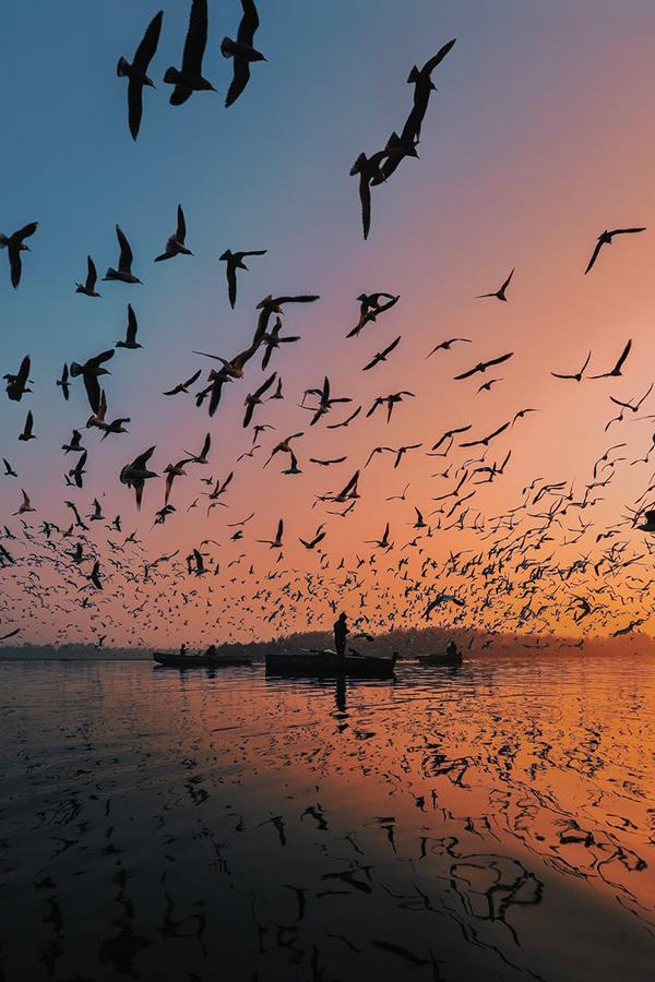 Photo de coucher de soleil avec des oiseaux